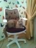 Кресло детское БЮРОКРАТ CH-W797, на колесиках, ткань, коричневый [ch-w797/br/tw-14c] вид 8
